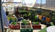 الزراعة المنزلية.jpg