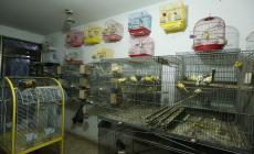تربية الطيور في جنين بين المهارة والتجارة