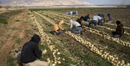الزراعة بفلسطين