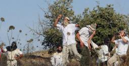 مستوطنون يهاجمون قرية برقة.jpg