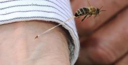 سم النحل.jpg