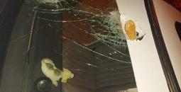 اعتداءات المستوطنين.jpg