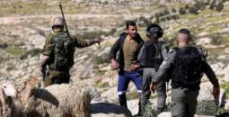 مستوطنون يسرقون قطيع أغنام شرق رام الله