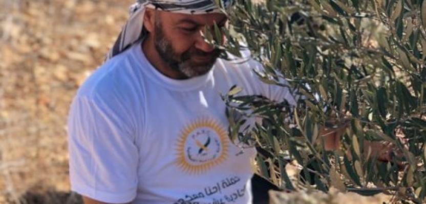 التكافل المجتمعي والوطني في موسم قطف الزيتون بنابلس