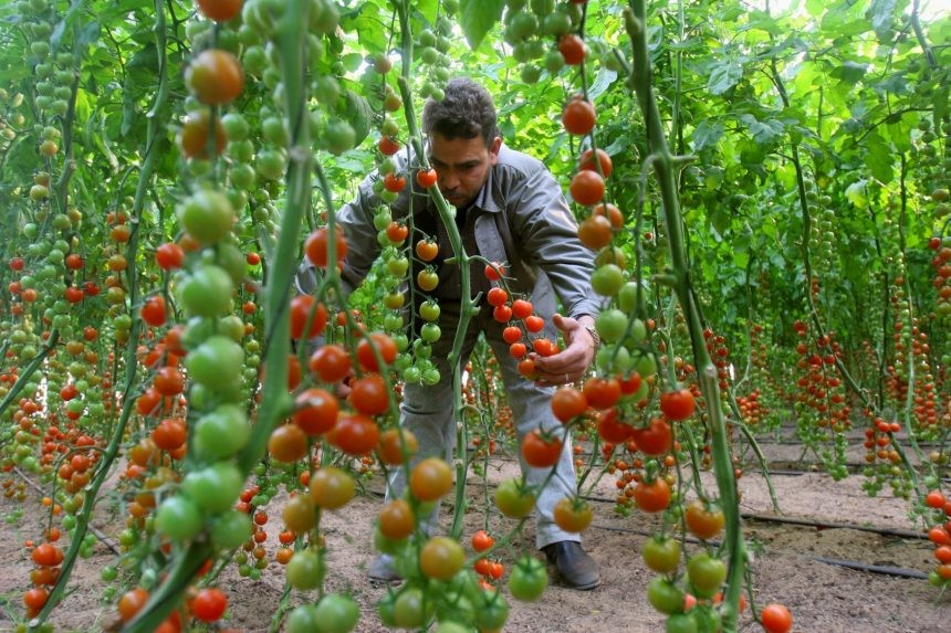 Greenhouse-Garden-Gaza-AP_060206016184-1-1-860x573.jpg